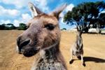 """澳大利亚自驾乐趣 在澳洲玩""""四国式""""穿越"""