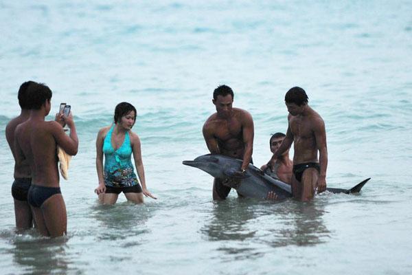"""与搁浅海豚合影的另一种""""到此一游"""""""