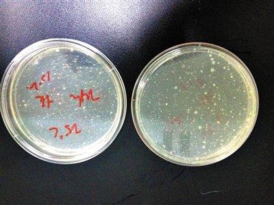 4小时后细菌大幅递增 西瓜切开能放多久
