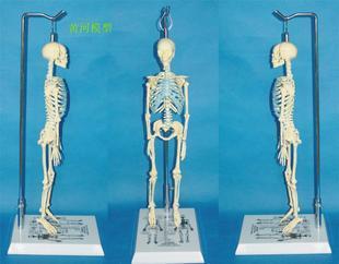 涉及人体医学研究须先过伦理审查
