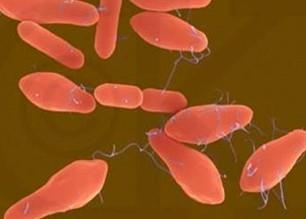 肉毒杆菌到底有多毒?