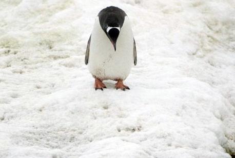 """企鹅""""照镜子""""10分钟 陶醉于倒影很自恋"""