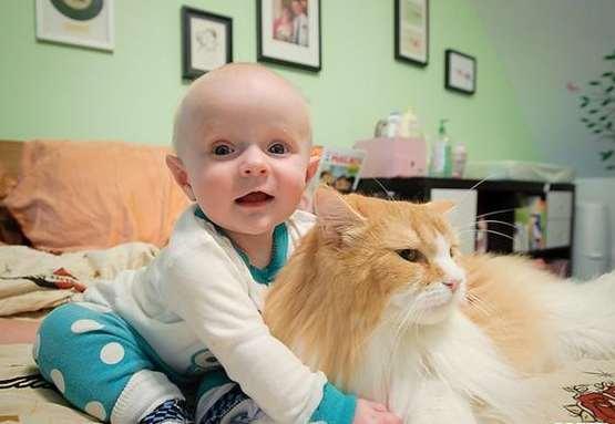 因直接或间接接触宠物引发的皮肤病病例显著增加,尤其是小孩受猫狗