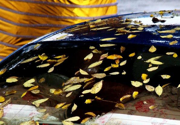 进入冬季注意汽车检修 车上落叶及时清除