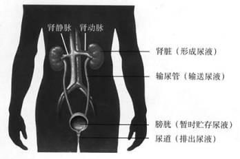 睡懒觉憋尿起床后尿不出 医生:憋尿时间过长损前列腺