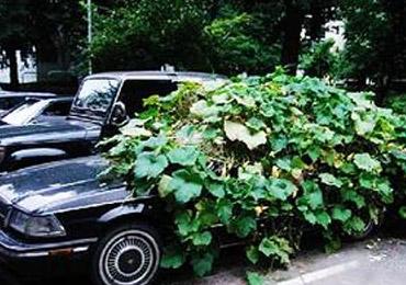 长期停驶车辆需保养 五步常规检查不可少