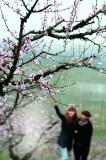 料峭春寒 期待花开