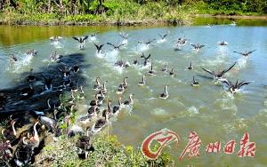 广州新增一H7N9病例 患者在休市期间发病