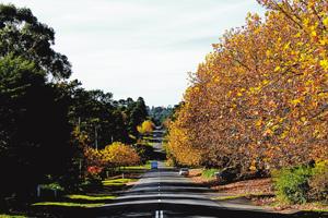 秋日澳洲蓝山背包行