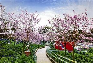 悠闲小长假 赏春在清明