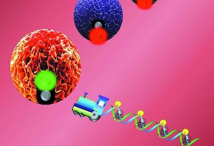 纳米药物 有望治疗阿尔茨海默病