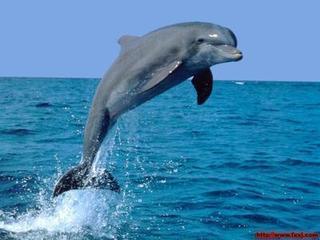 """海豚为爱""""自杀""""?"""