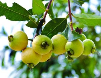 夏天水果成熟季节 来一次甜蜜的约会