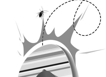 蟑螂矢量图gif