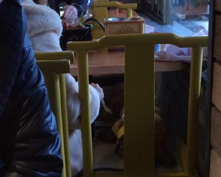 女子餐厅就餐时用勺子喂狗 引热议