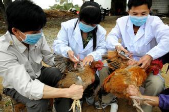 接触过家禽持续高烧 做H7N9核酸检测