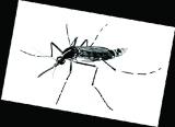 花斑蚊已有抗药性 灭蚊得换药