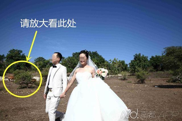 花2.9万到巴厘岛拍婚纱照竟在黄泥沙滩与牛合影