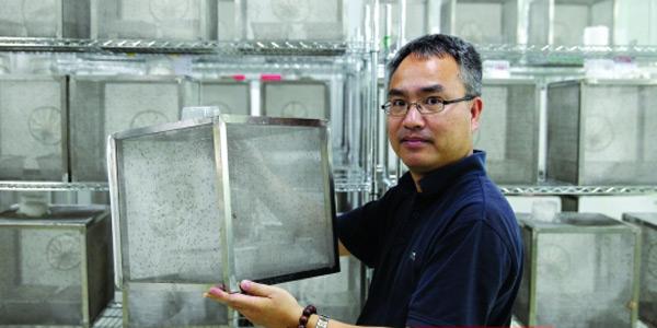 探秘世界最大蚊子工厂:每周生产50万绝育雄蚊