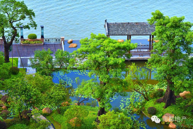 而且,星河湾半岛是目前广州在售楼盘中难得的先做园林,现楼销售的楼盘