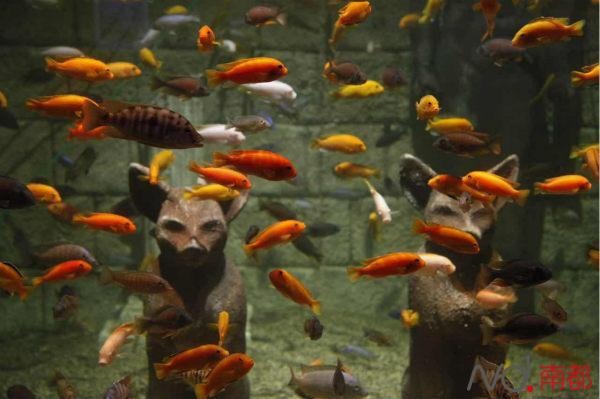海洋动物保护动物