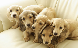关于宠物绝育,你不得不知道的那些事