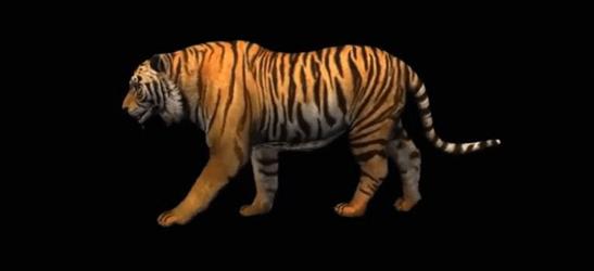 又有新动态,盟云移软动物世界全息ar作品《行走的老虎》即将重磅推出