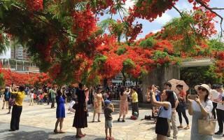 最美的凤凰花在哪?大家都说是深圳华侨城生态广场