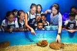 海洋馆半日游让留守儿童更懂得尊重生命