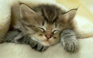 猫狗BB的护理大全:保暖是关键
