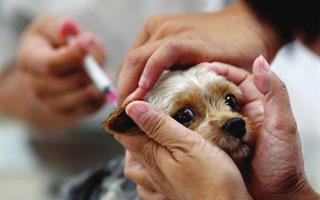 犬猫疫苗注射安全8问,听专家医生怎么说