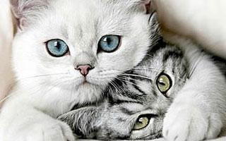 猫多囊肾病知多少?大都被主人忽视