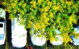 再不出发,春天就溜走了!广州户外运动节本月启动