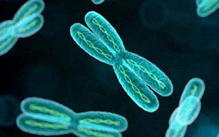 """""""全面二孩""""第一年 高龄产妇染色体异常检出率倍增"""