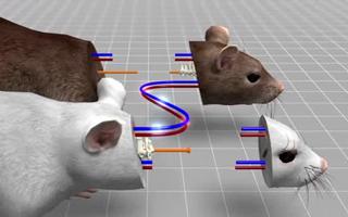"""意科学家移植老鼠头 被批""""违反伦理道德"""""""