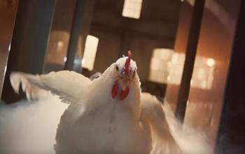肯德基广告在英恶评如潮 网友:考虑过鸡的感受吗?