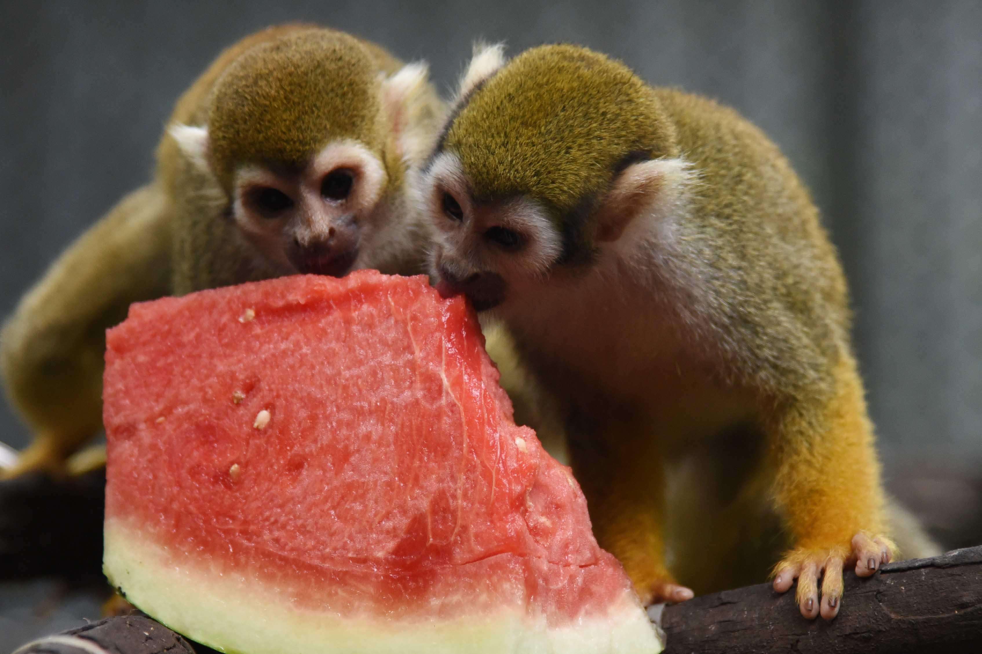 立夏时节 深圳野生动物园为动物们换新口味