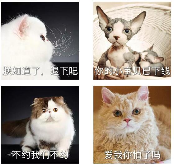 """""""宠物识别""""小程序还提供宠物照片直接制作表情包功能"""