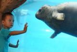 深圳野生动物园6只海豹首秀亮相萌翻天