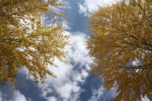 广州入秋成功了!但气温依旧高,你今天还是短袖吗?
