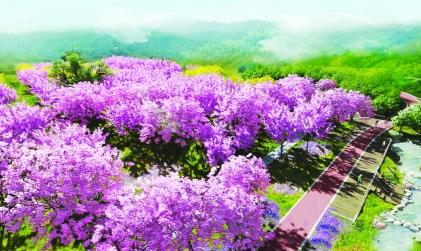 风铃谷又添新绿 罗湖将营造大规模山海花林景观