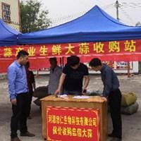 """由深圳帮扶种植资金,河源柘陂村""""订单式""""扶贫"""