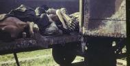 纳粹首个集中营罕见彩照曝光:尸体成车运